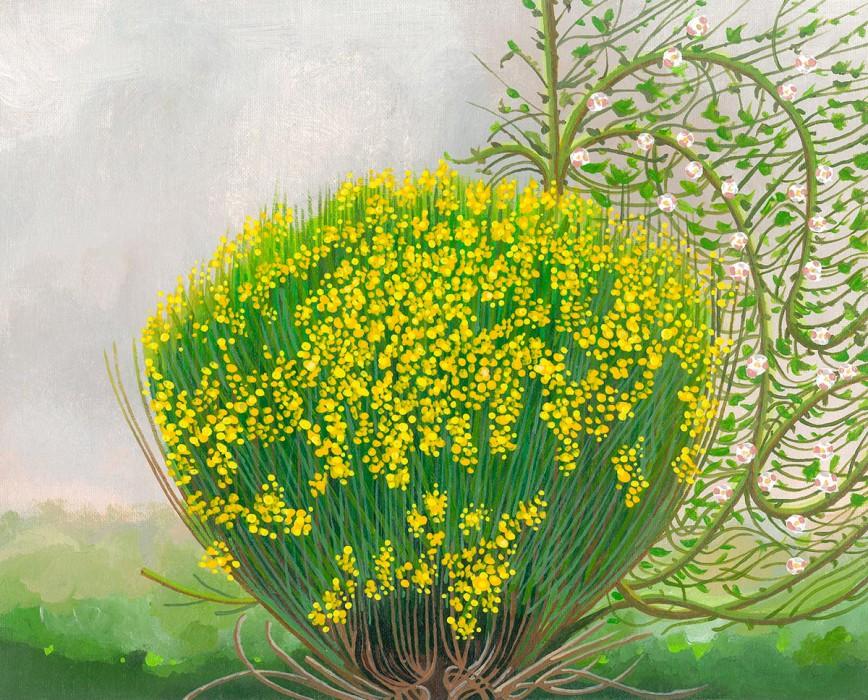 Spring Broom